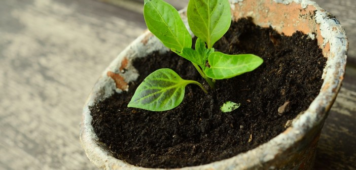 Stock photo of a small green plant potted in a weathered clay pot
