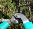 Stock photo of a set of pruning shears in use
