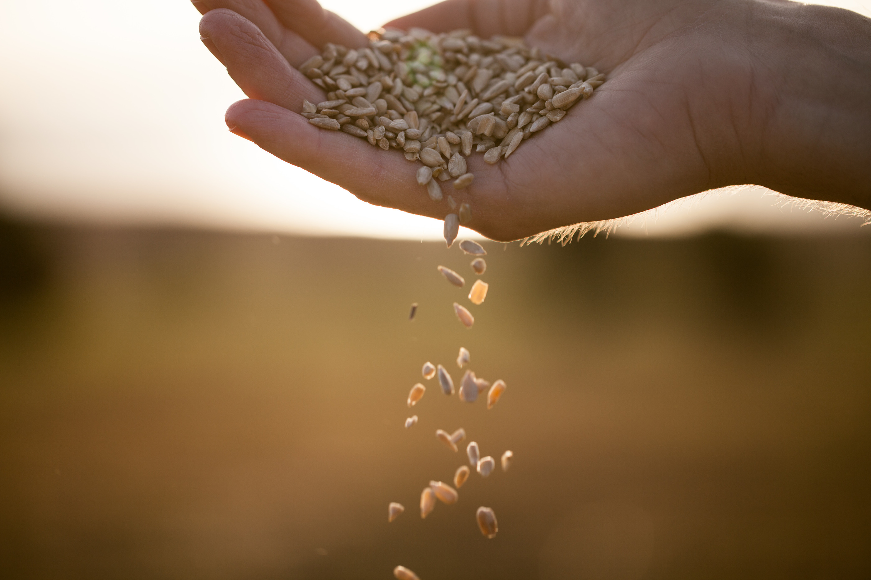 The Parable of the Sower and the Experience of Church Growth