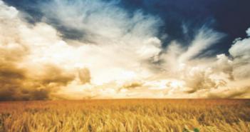 Stylized image of golden wheat fields