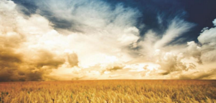 Stylized image of golden wheat fields
