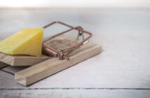Piece of cheese in a mousetrap