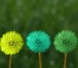 Dandelion puffs painted different colors
