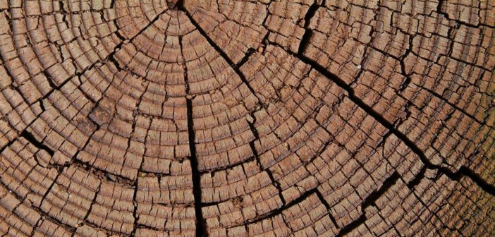 Cracked rings of a tree trunk