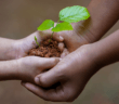 Seedling being passed from an adult's hands to a younger person's hands